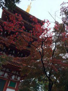 高幡不動尊にて護摩修行をさせていただきました。